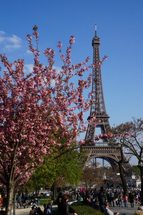 Eiffel Tower In Springtime