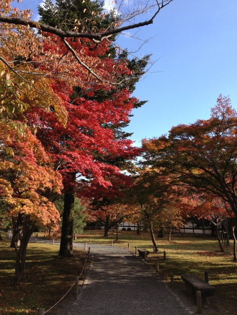 Fall Foliage Near Nijo Castle